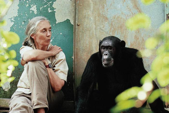 This image has an empty alt attribute; its file name is jane-goodall-with-chimp-freud-2.jpg